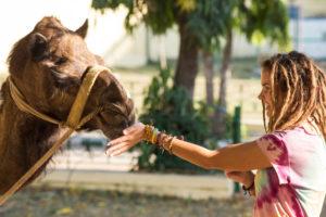 Девушка и верблюд